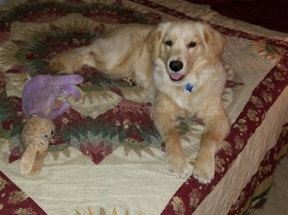 Ellie Oct 26 2017 with Old Buddy-4.jpg