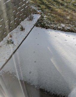 SnowTracks1-111419.jpg
