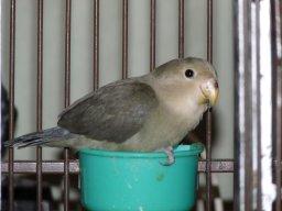 birdlover99